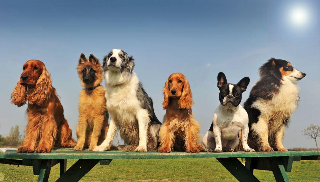 dogsontable.jpg#asset:6456